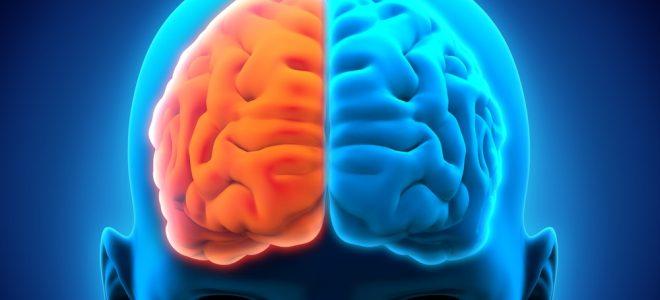 BuddhaTea Reishi Mushroom Tea for Brain Function