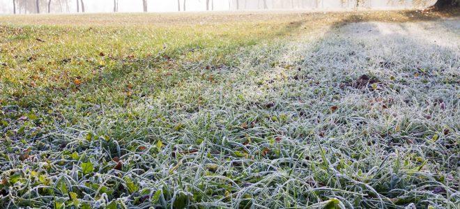 winter-lawn-care