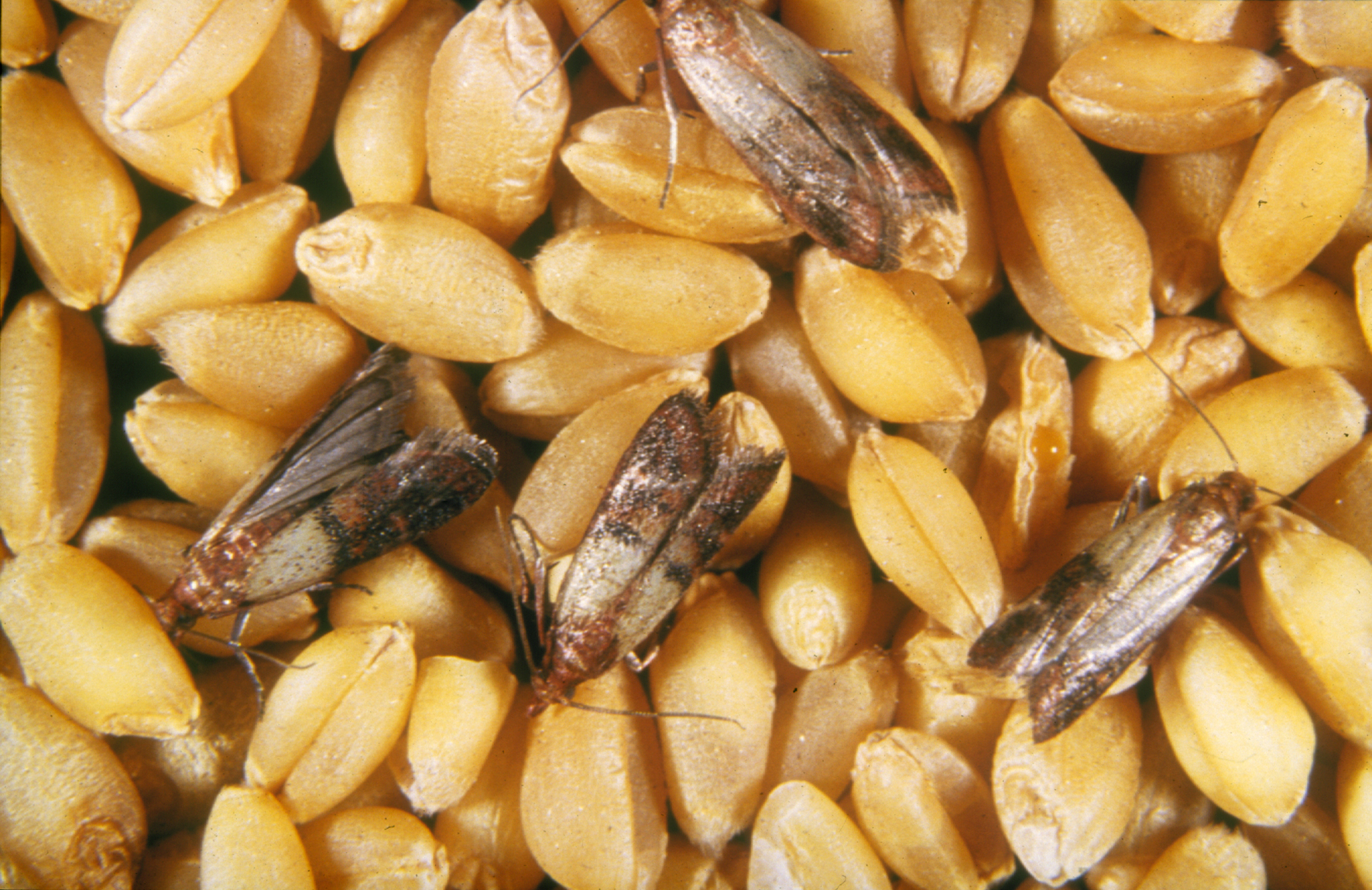 How To Store Food Prevent Pests